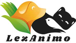 Tout savoir sur les animaux